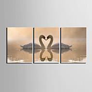 Reprodukce na plátně umění zvířatech Swan Lovers Sada 3