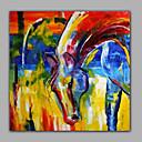 halpa Aikuisten asut-Hang-Painted öljymaalaus Maalattu - Eläimet Moderni Kangas