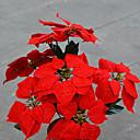 tanie Sztuczne kwiaty-Sztuczne Kwiaty 1 Gałąź Styl nowoczesny Poinsecja Bukiety na stół