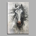 cheap Oil Paintings-Oil Painting Hand Painted - Animals Animals Rolled Canvas