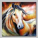 tanie Tapety-Hang-Malowane obraz olejny Ręcznie malowane - Zwierzęta Zwierzęta / Nowoczesny Brezentowy / Walcowane płótno