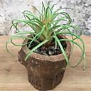 ieftine Flori Artificiale-Flori artificiale 1 ramură Clasic Rustic Plante suculente Față de masă flori