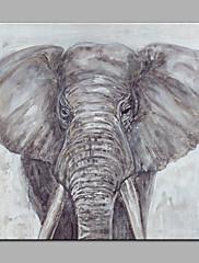 Pintados à mão Animal Modern 1 Pça. Tela Pintura a Óleo For Decoração para casa