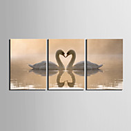 Stretched Canvas Print Art Animal Swan Lovers Set of 3