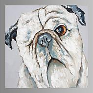 billiga Djurporträttmålningar-Hang målad oljemålning HANDMÅLAD - Popkonst Samtida Duk