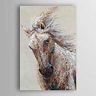 יד סוס ריצת חית ציור שמן צבועה עם arts® קיר מסגרת 7 נמתחה