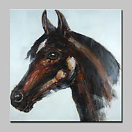 billiga Djurporträttmålningar-HANDMÅLAD Djur Pop olje,Moderna Europeisk Stil En panel Kanvas Hang målad oljemålning For Hem-dekoration