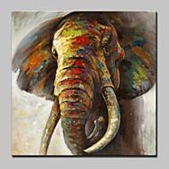 billiga Djurporträttmålningar-Hang målad oljemålning HANDMÅLAD - Popkonst Moderna Inkludera innerram / Sträckt kanfas