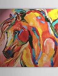 Abstraktní ZvířeJeden panel Plátno Čtvercový Hang-malované olejomalba Wall Decor For Home dekorace