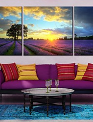 cheap -Stretched Canvas Art Under The Sunset of Lavender Farm Landscape Set of 3