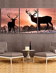 Stretched Canvas Print Animals Modern,Three Panels Canvas Vertical Print Wall Decor For Home Decoration