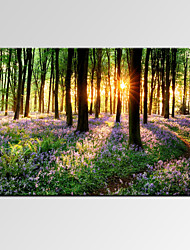 cheap -VISUAL STAR®Beautiful Lavender Forest Digital Canvas Prints Modern Bedroom Decor Art Print Ready to Hang