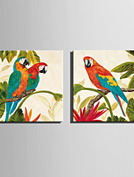 cheap -Mini Size E-HOME Oil painting Modern Colorful Parrot Pure Hand Draw Frameless Decorative Painting