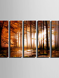 cheap -E-HOME Stretched Canvas Art Quiet Woods Decoration Painting Set Of 5