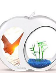 Mini Aquários Ornamentos Poupança de Energia Vidro