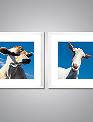 Framed Art Print Animal Leisure Modern Realism,Two Panels Canvas Square Print Wall Decor For Home Decoration