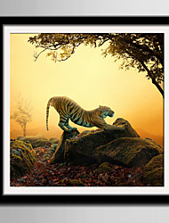 cheap -E-HOME® Framed Canvas Art Lazy Tiger On Stone Framed Canvas Print One Pcs