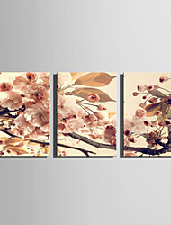 E-HOME Stretched Canvas Art Beautiful Pink Flowers Decoration Painting Set Of 3
