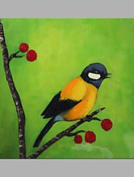 abordables -Peint à la main Animaux Carré, Artistique Toile Peinture à l'huile Hang-peint Décoration d'intérieur Un Panneau