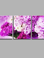 Floral Emblems 3 Panels Hand-painted Oil Paintings on Canvas Modern Artwork Wall Art for Room Decoration 20x28inchx3