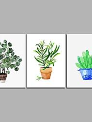 Недорогие -Кактус 3-х частей современного искусства настенного искусства для украшения комнаты 20x28inchx3
