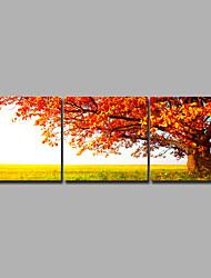 Недорогие -С картинкой Роликовые холсты / Отпечатки на холсте - Пейзаж / Времена года Modern