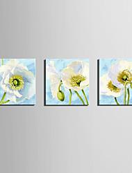 Недорогие -С картинкой Роликовые холсты Отпечатки на холсте - ботанический Цветочные мотивы / ботанический Modern 3 панели
