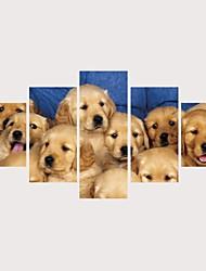 levne -Grafika Válcované plátno Reprodukce maleb na plátně - Zvířata Domácí mazlíčci Současný styl Moderní Pět panelů