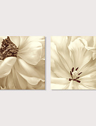 preiswerte -Druck Aufgespannte Leinwandrucke - Blumenmuster / Botanisch Abstrakte Landschaft Modern