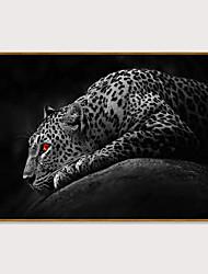 Недорогие -Отпечаток в раме Набор в раме - Животные Полистирен Фотографии Предметы искусства