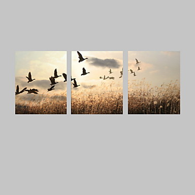 Görsel star®animal asmak için tuval baskı sanatı kaliteli gökyüzü kuş tuval hazır gergin