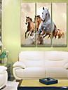 Stretchad Kanvastryck Kanvas set Djur Tre paneler Vertikal Tryck väggdekor Hem-dekoration